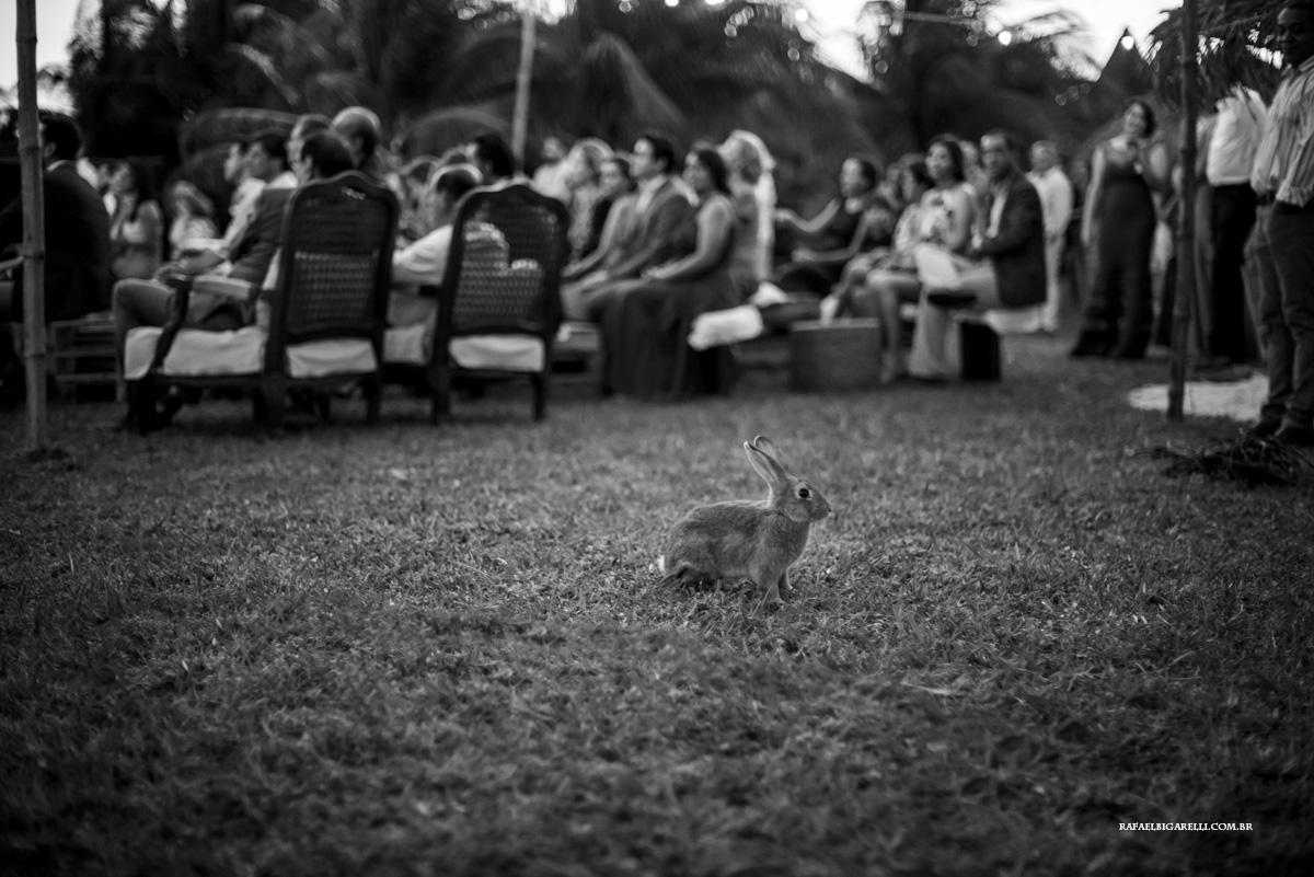 coelho invade cerimonia de casamento