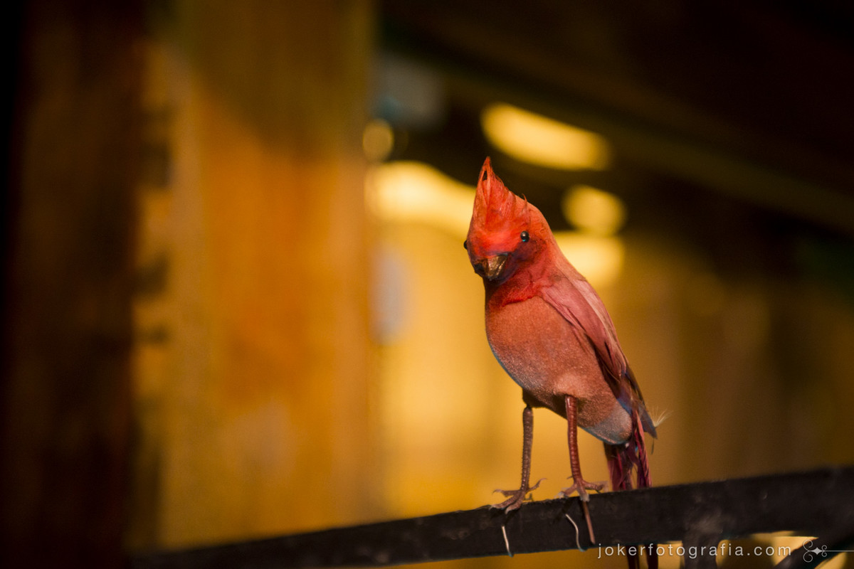 fotógrafo encontra um passarinho no meio do casamento! (mas era parte da decoração)