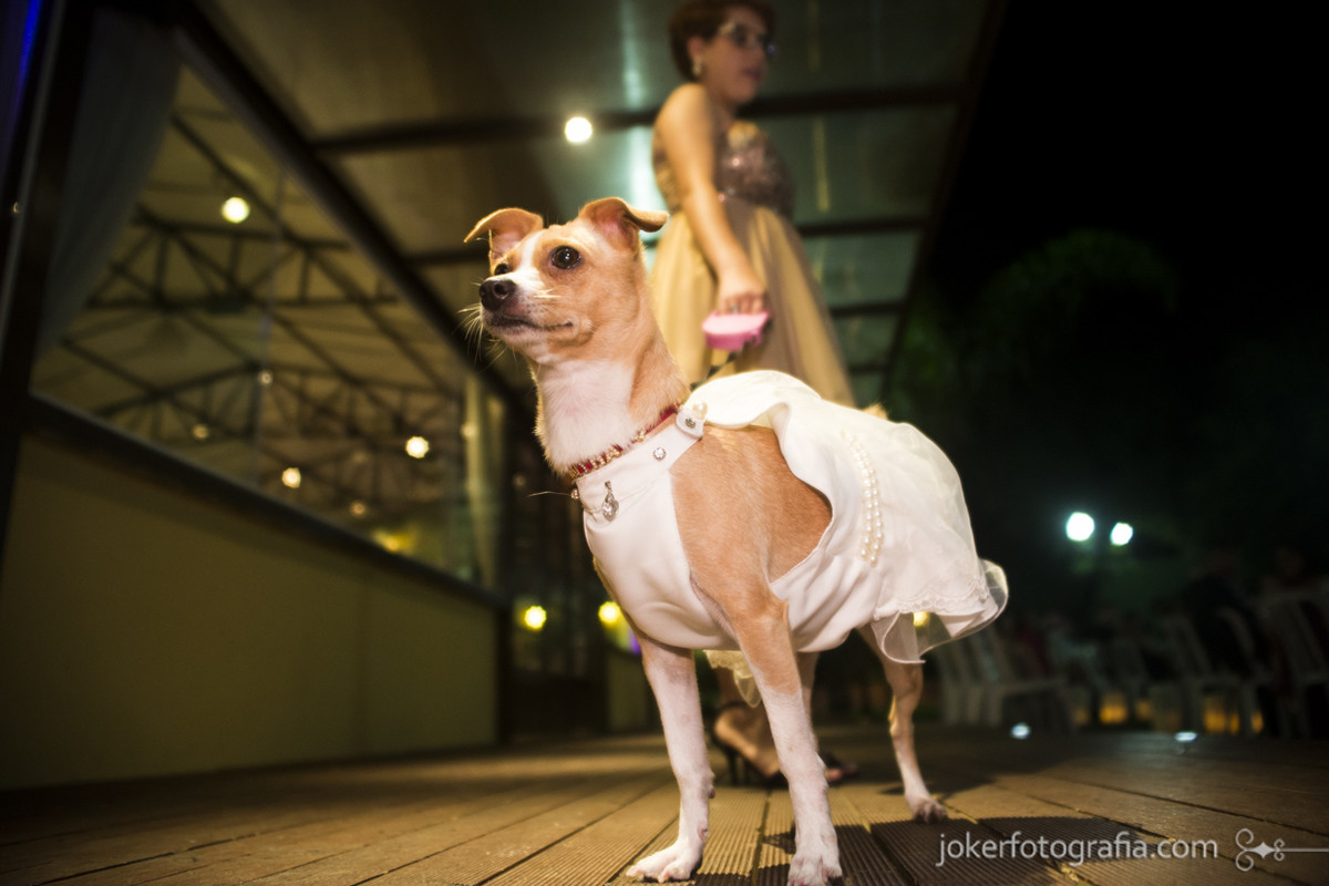cachorra de daminha