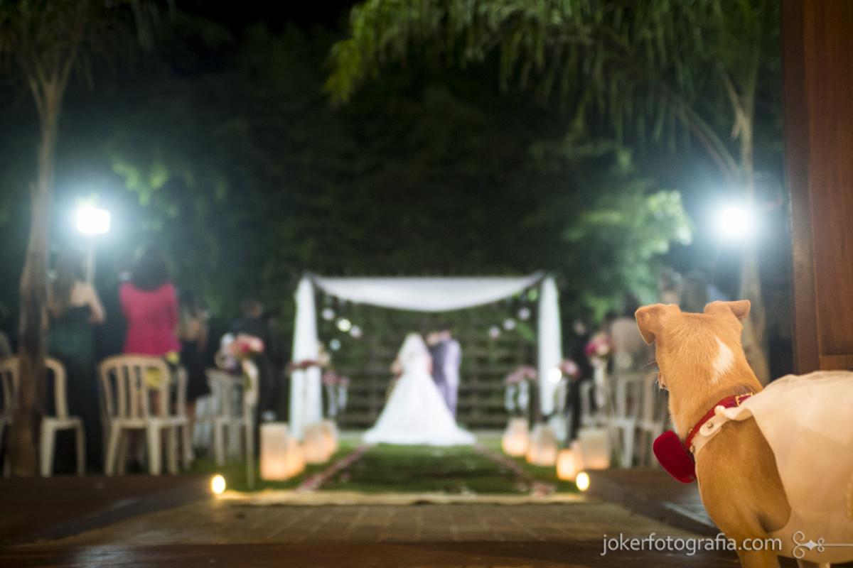 cachorrinha no casamento