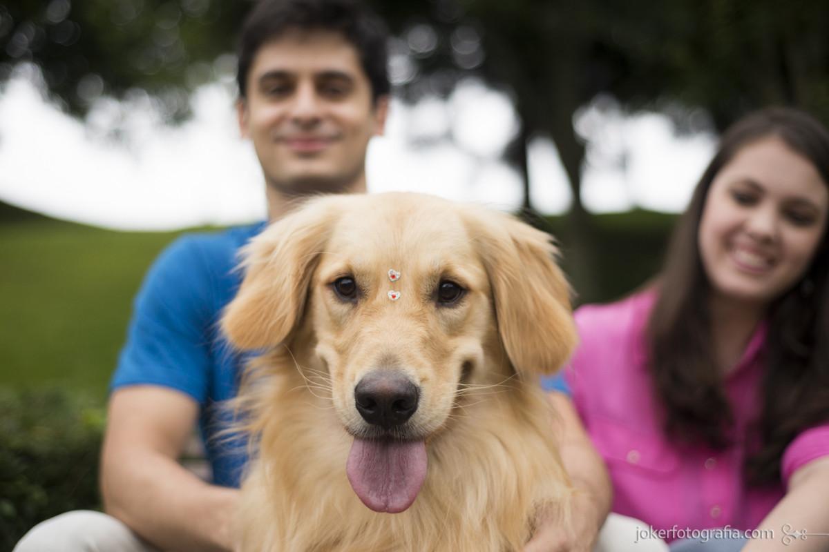 001 - ensaio_casal_cachorro_golden_pre_wedding_pet.jpg