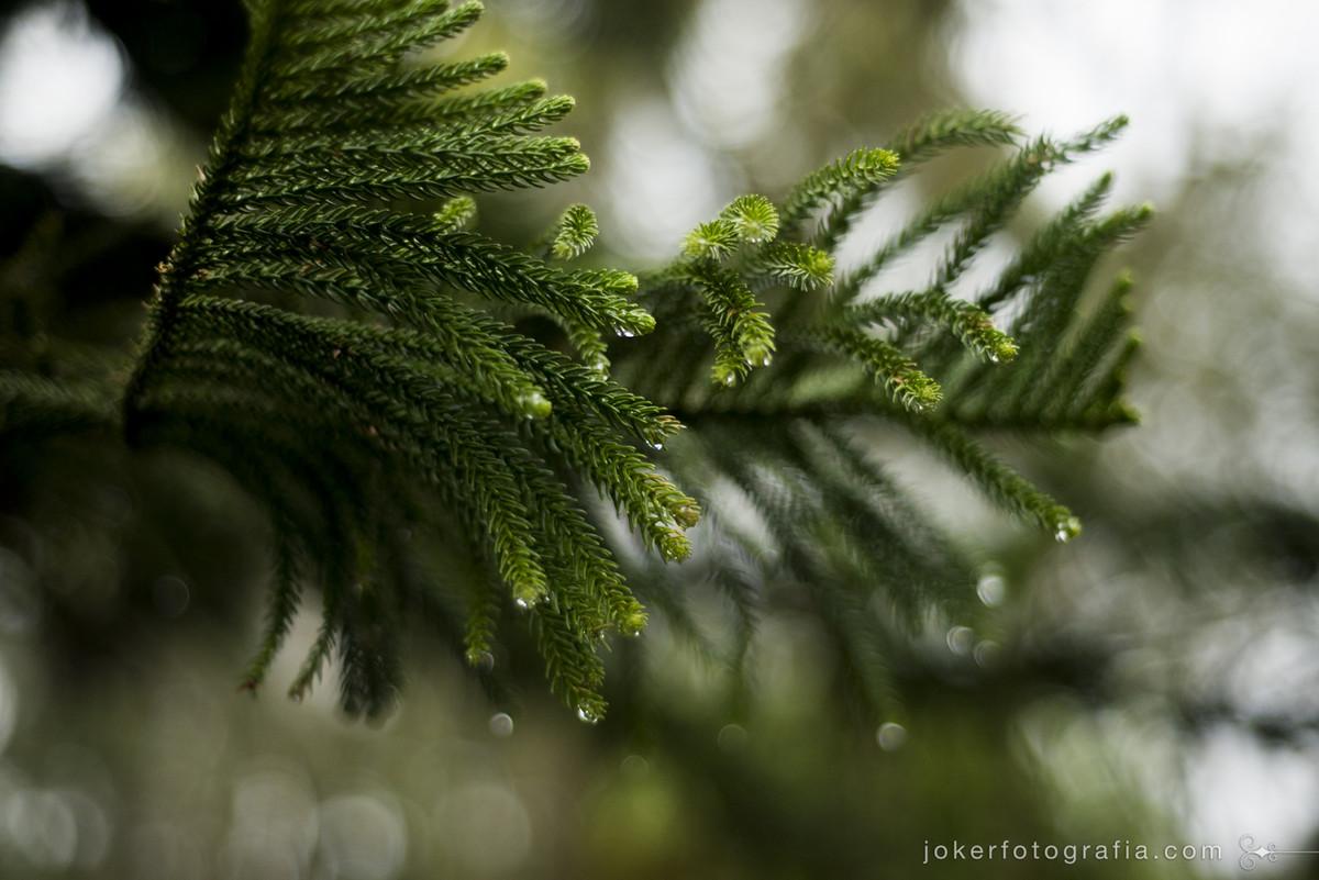fotografar em dia de chuva