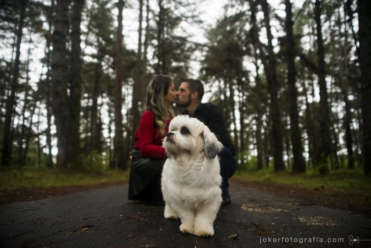 ensaio com cachorro lhasa no bosque de pinheiros fotógrafo curitiba