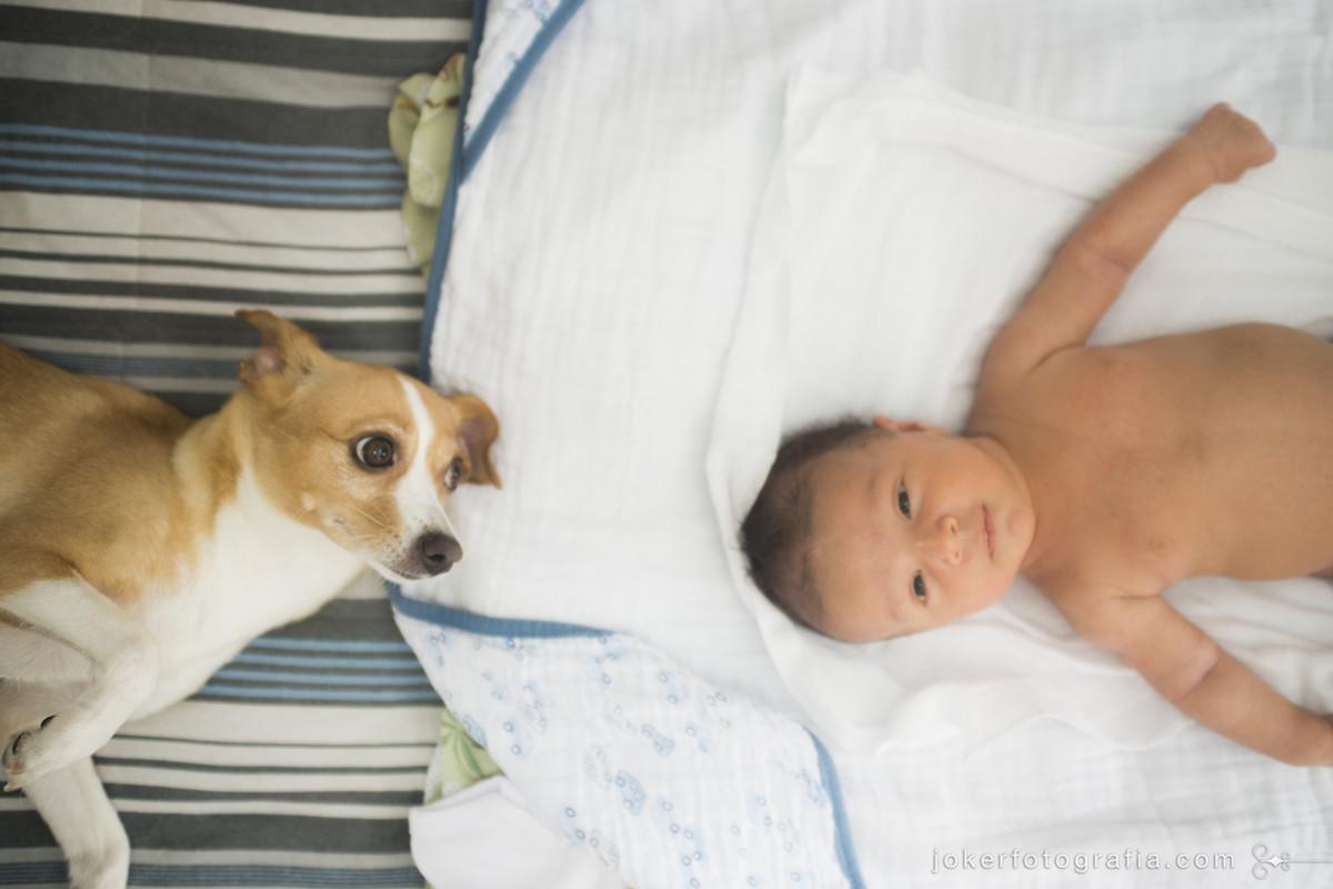 ensaio de bebê com cachorro da tem fotos divertidas e retrata o dia a dia da família