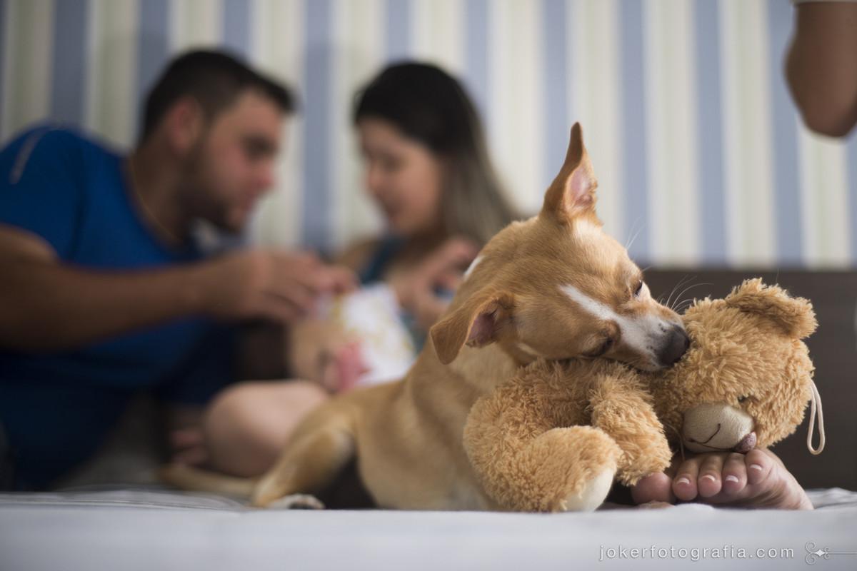 ensaio newborn com cachorro tem fotos divertidas da rotina dos pais e da família