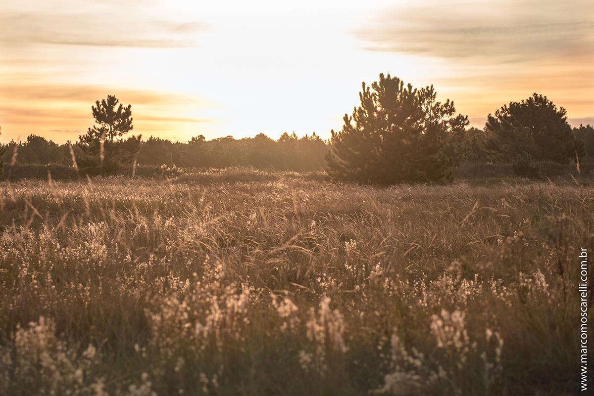 Detalhe da paisagem do las acacias onde foi realizado o ensaio pré casamento. Pré wedding Foto do final da tarde de outono  por Marco Moscarelli Fotografo