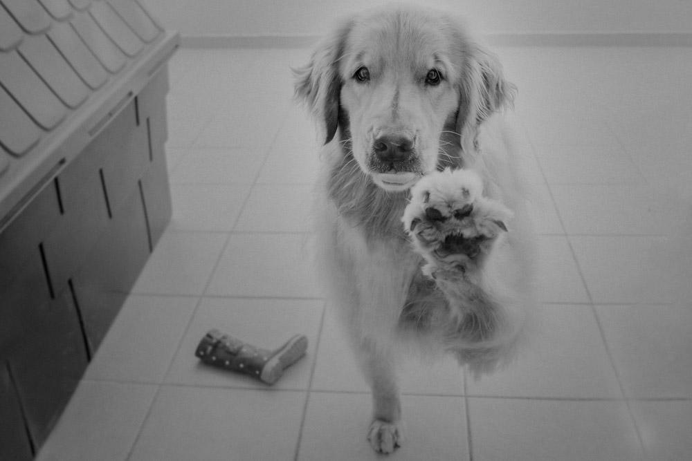 Fotografia Afetiva Aline Lelles e Rodrigo Wittitz , FotoPets Ensaio de Pets , Fotografia de Animais , Ensaio de Família , Fotografia de Família