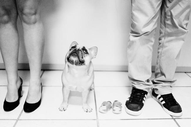 book ensaio gestante externo em casa animal de estimação cachorro são bento do sul chroma fotografia