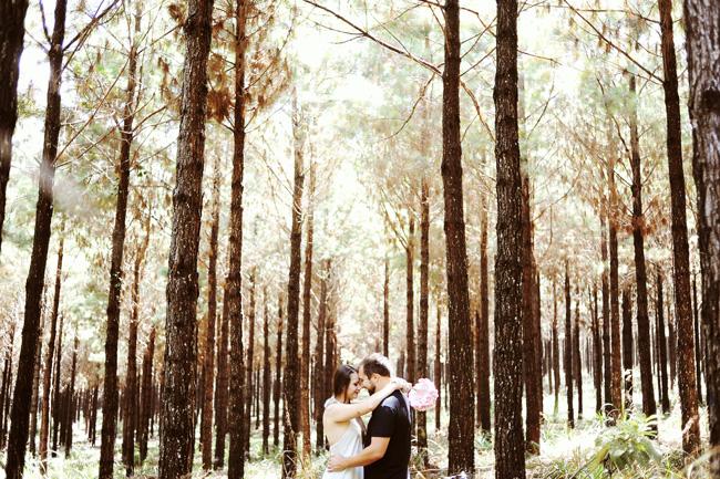 pré-casamento plantação pinus rio negrinho chroma fotografia