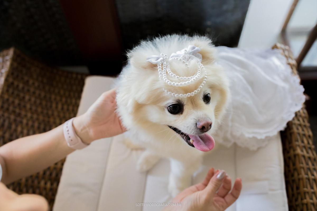 casamento trancoso, sotter fotografia, fotografo de casamento trancoso, casamento, noiva, festa