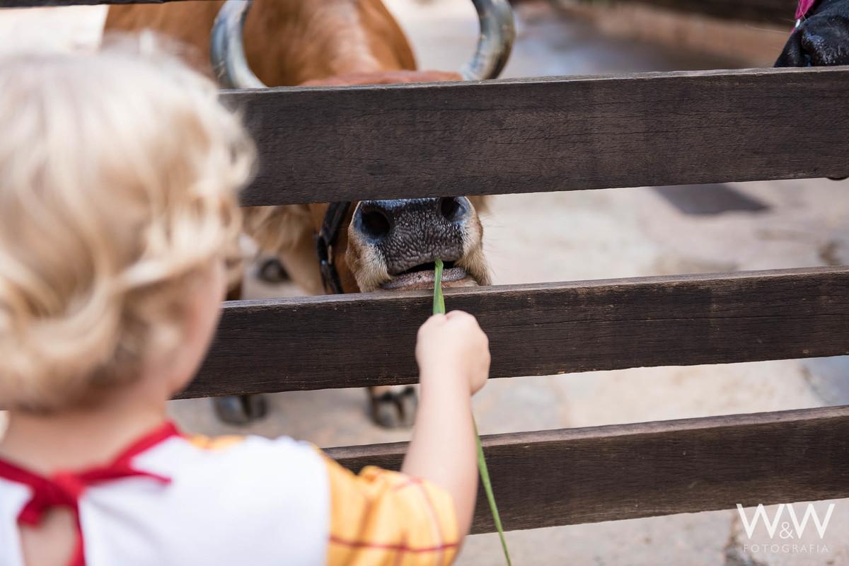 festa aniversário fazendinha animais são paulo wewfotografia