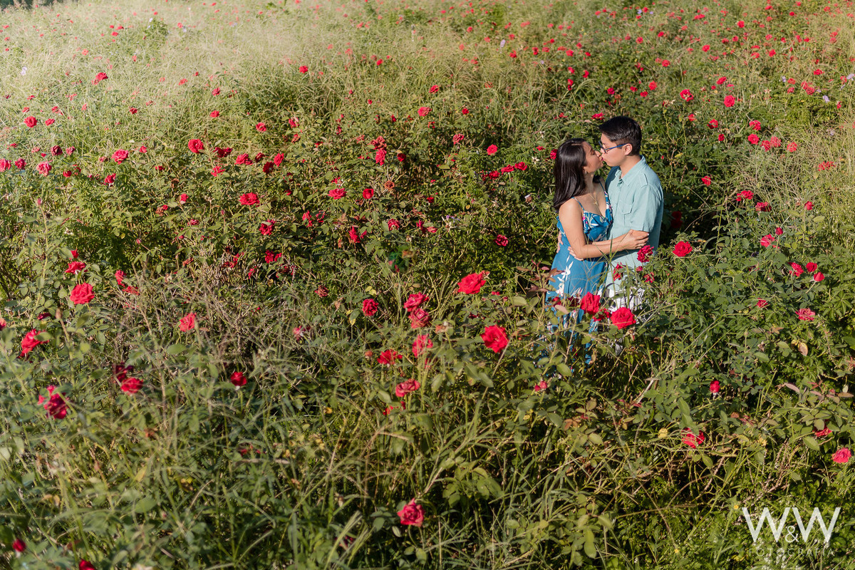 ensaio pré wedding casal oriental holambra roseiral