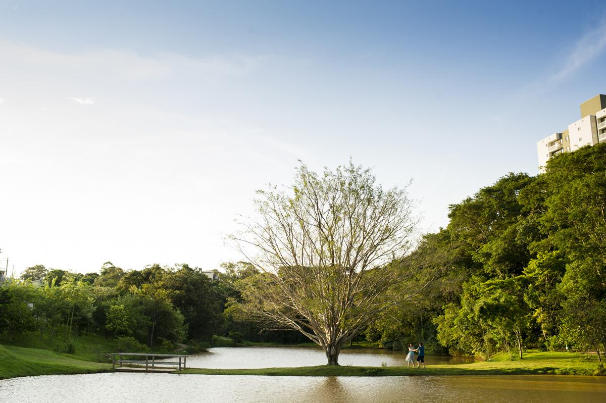 Gira-gira na paisagem