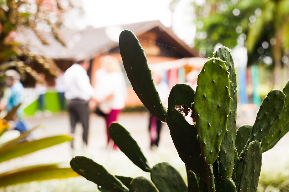cta eventos, aline paim fotografia, fotografo em joinville, cacto, planta
