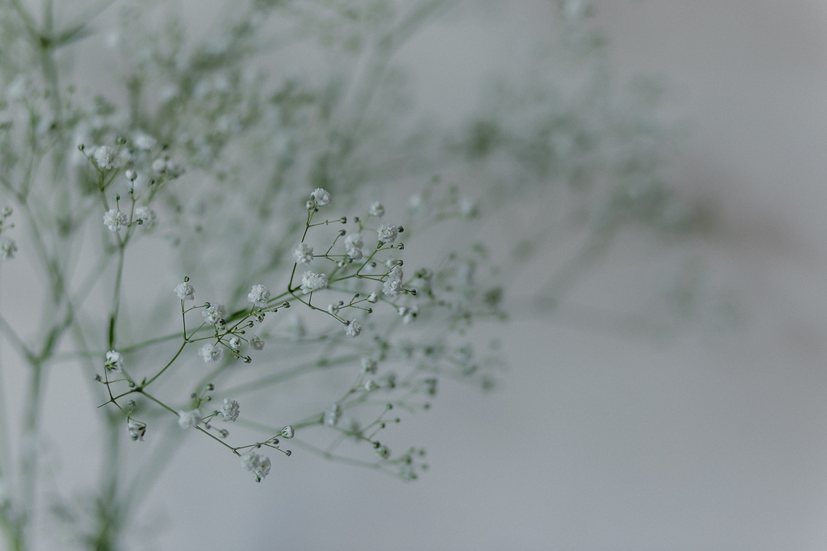 detalhes da flor