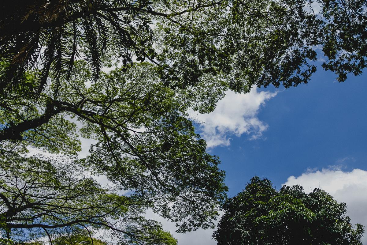 arvore e céu azul em dia ensolarado