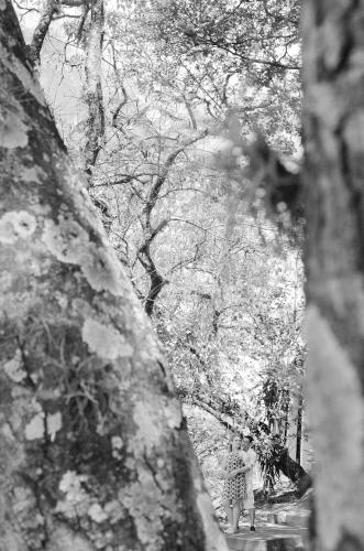 muitas arvores na fotografia ensaio de casal no hotel fazenda duas marias em jaguariuna sao paulo pelo fotografo casamento campinas fernando coutinho