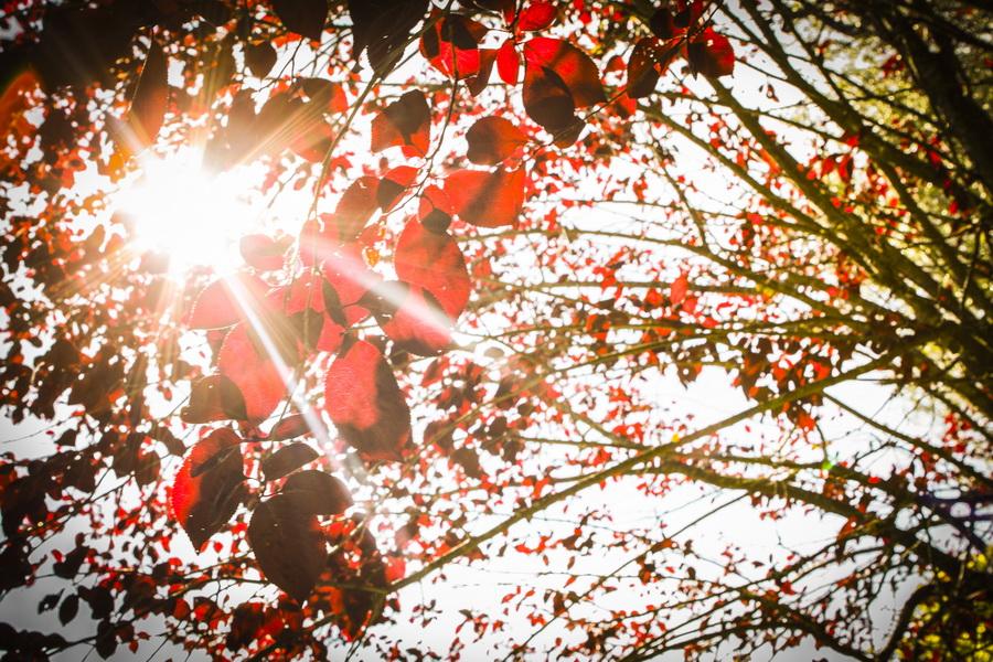 Sol a passar pelas folhas - Alentejo