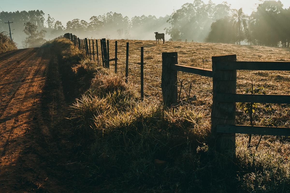 raios de sol invadem o campo e cortam neblina no amanhecer do dia no interior de Estrela