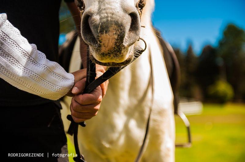 ensaio, pre wedding, esession, campos do jordao, são paulo, fotos cavalos, haras
