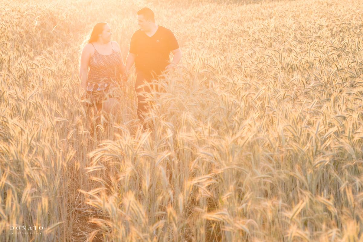 foto final de tarde no trigo em Holambra