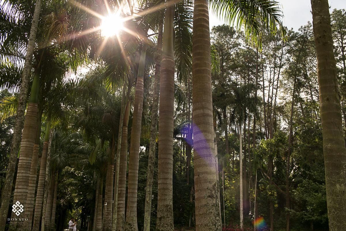 entrada da fazenda 7 lagoas, com seus lindo coqueiros gigantes, e os noivos nesta entrada.