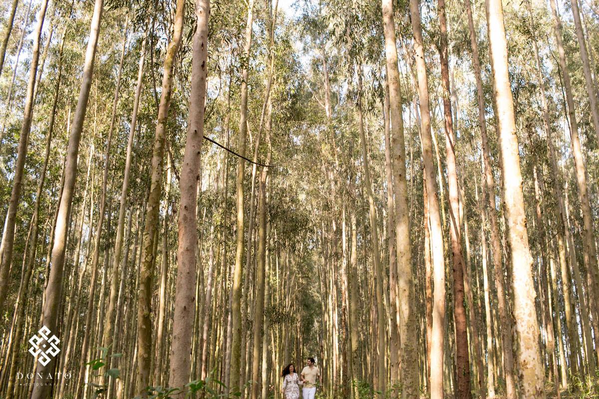 Casal caminha entre os eucaliptos gigantes, os noivos estão pequenos e distante nesta imagem.