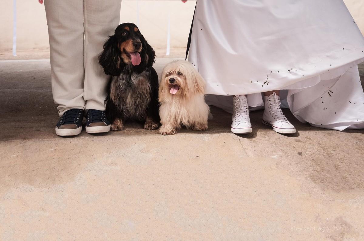 casamento com cachorros, casamento com pets, casamento vintage em minas, mini wedding paraty, casamento angra dos reis