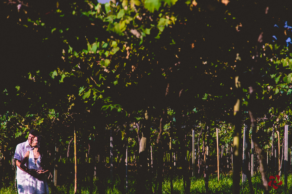 Noivos na parreira de uva