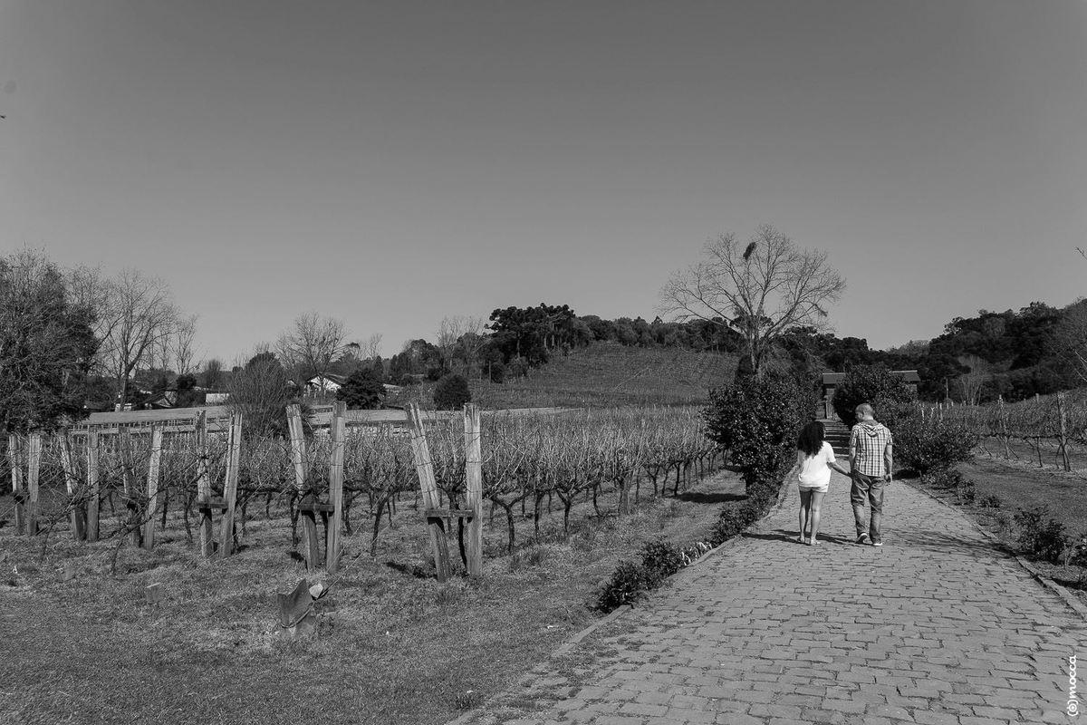 ensaio casal, ensaio fotográfico, amor, bento gonçalves, caminhos de pedra, vinhedos, parreira de uva, pre wedding