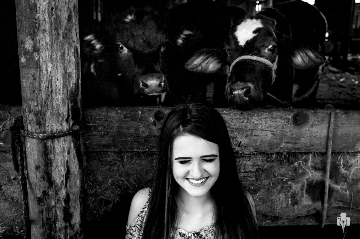 ensaio de 15 anos com as vacas