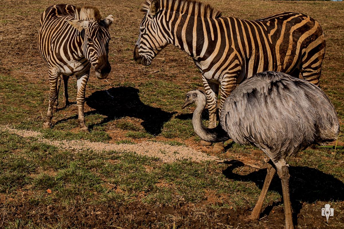 passeio em familia de nei bernardes e beth esquinatti no pampa safari em sapucaia rs