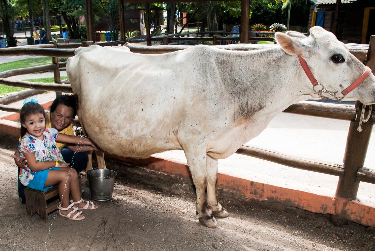 tirando leite da vaca no Buffet Pet Zoo, Cotia, São Paulo, aniversário de Maria Clara 4 anos, Buffet Pet Zoo, Cotia, São Paulo, tema da festa Dora a Aventureira