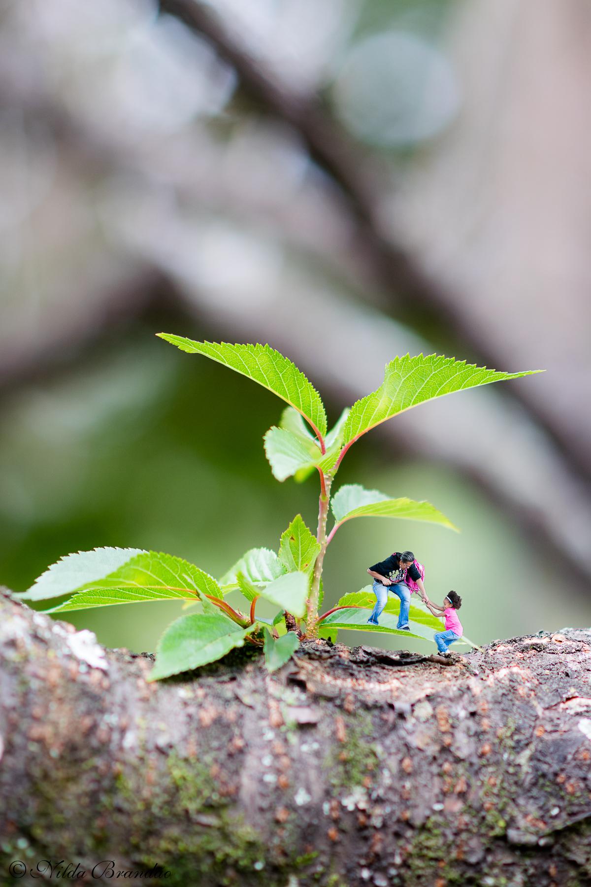 Ensaios infantis também tem espaço para o lúdico e a brincadeira, nessa montagem, mãe e filha escalam a folhinha da árvore.