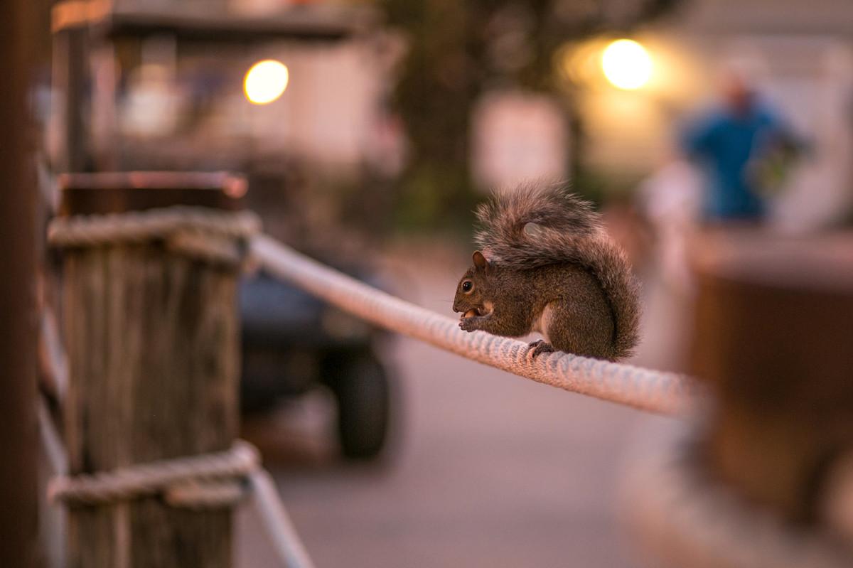 esquilo comendo em Boardwalk na Disney em Orlando na Florida