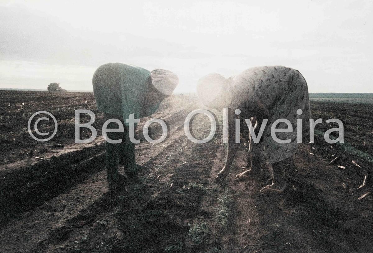 idosas, agricultura, sol. beto oliveira