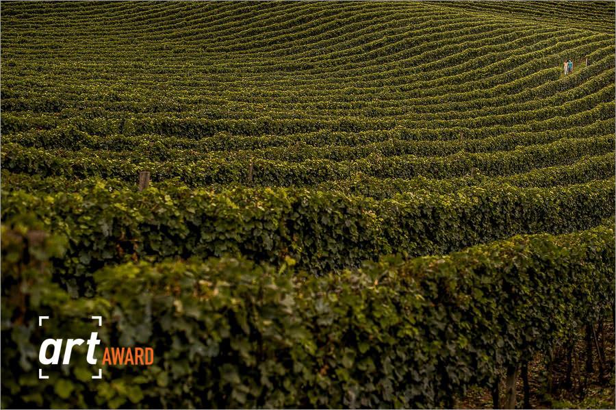 fotos de casamento premiadas pela fineart association - foto no meio das uvas na serra gaucha - foto pré-casamento nas parreias de uvas na serra gaucha - vinicula miolo na serra gaucha
