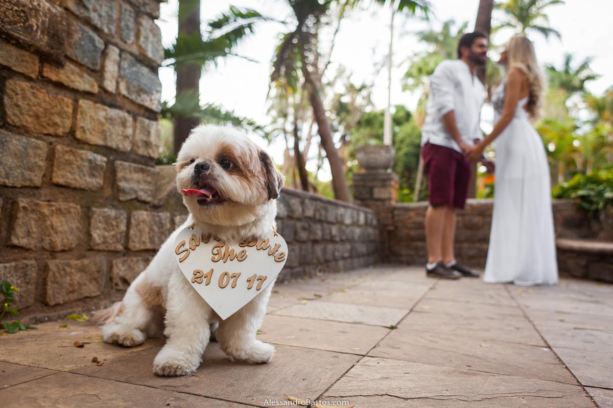 cacorrinho dos noivos no ensaio pre-wedding para a fotografia do casamento em bh pões a língua pra fora