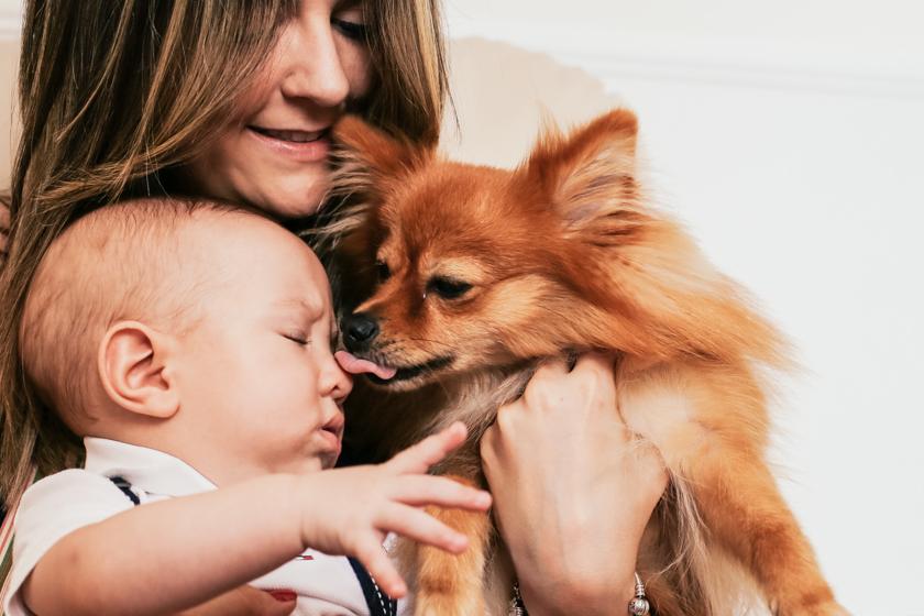 ensaio família cotidiano benicio priscila filipe camilakobata camila kobata amor paixão presente de Deus dog cachorro