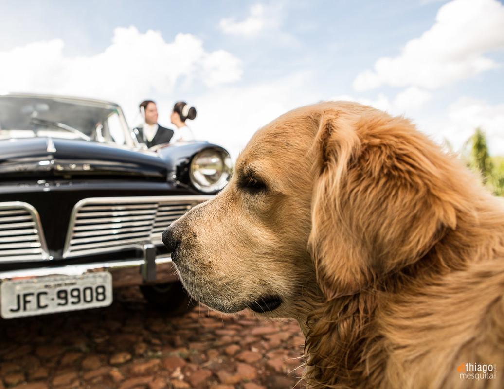 cachorro em casamento