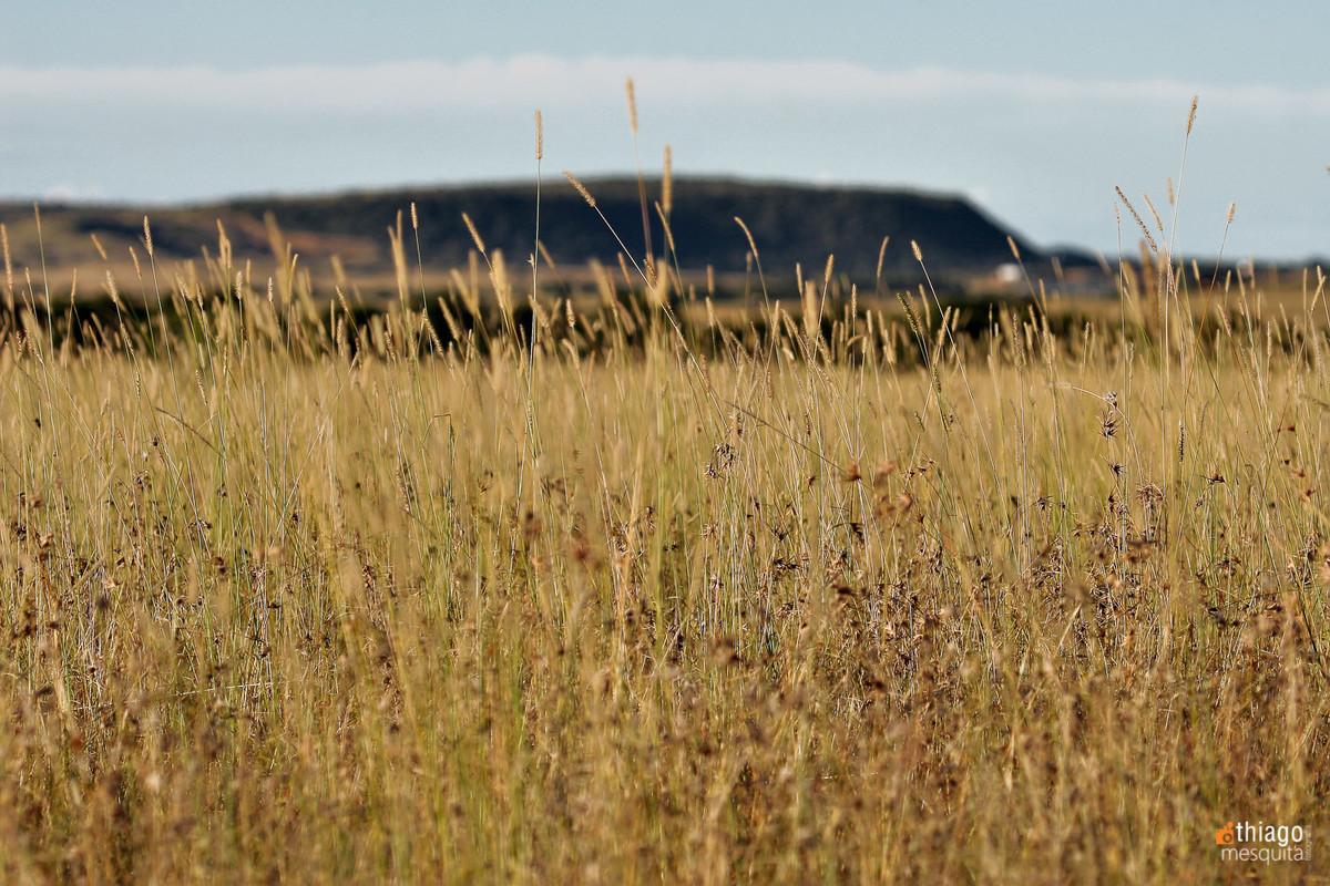 bluemfontein - south africa - land