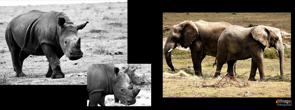 south african photos destination wedding safari