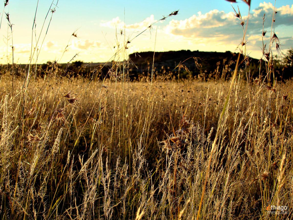 bluemfontein - south africa landscape
