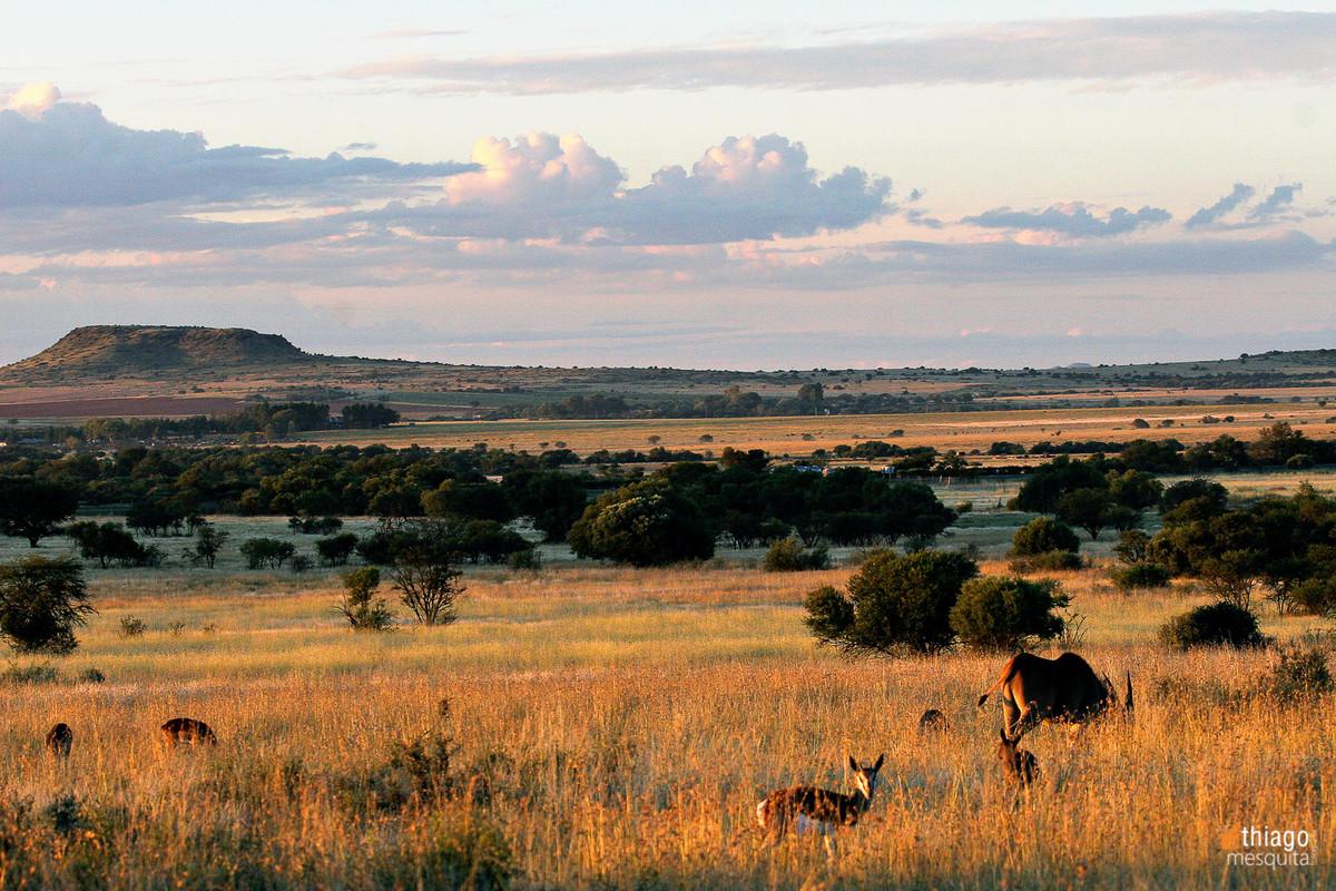 bluemfontein - south africa animals