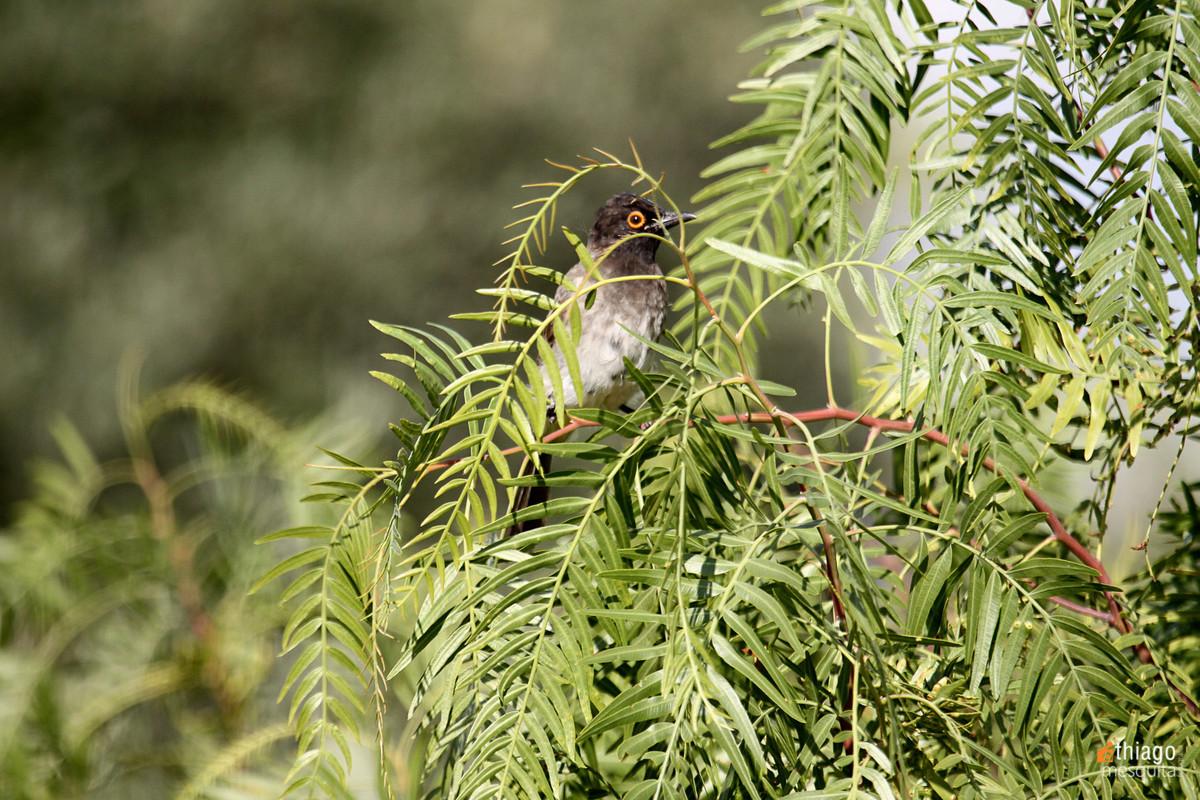 bluemfontein - south africa bird