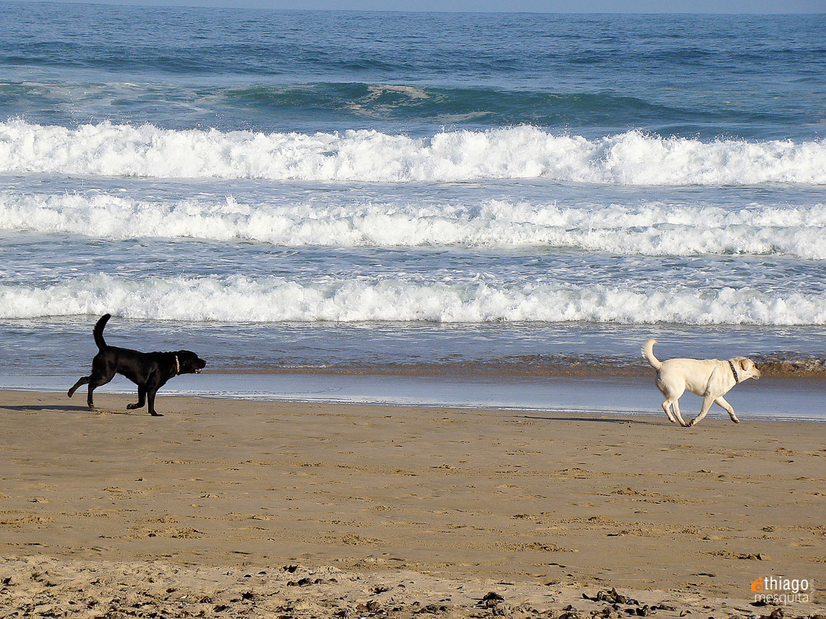 south african beach - black dog and white dog