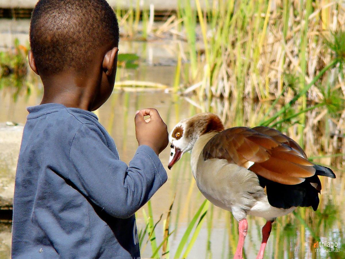 criança africana e pato