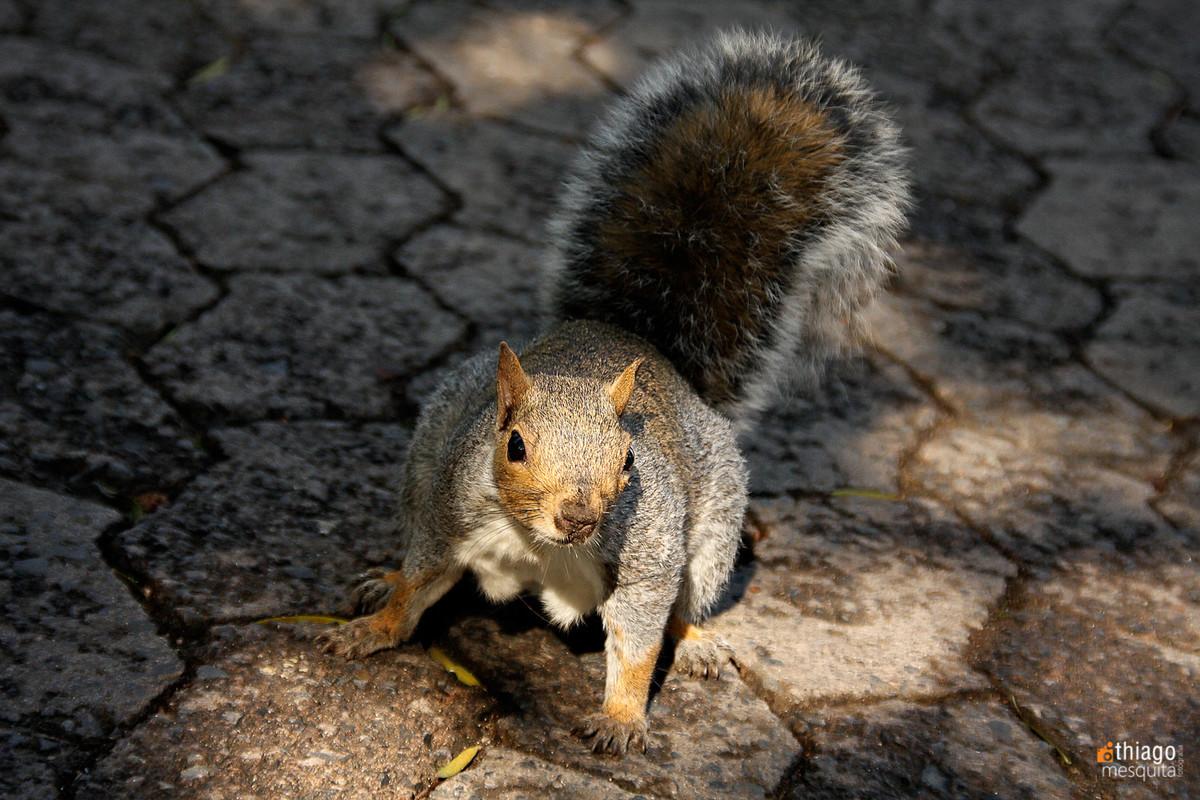 esquilo na áfrica do sul