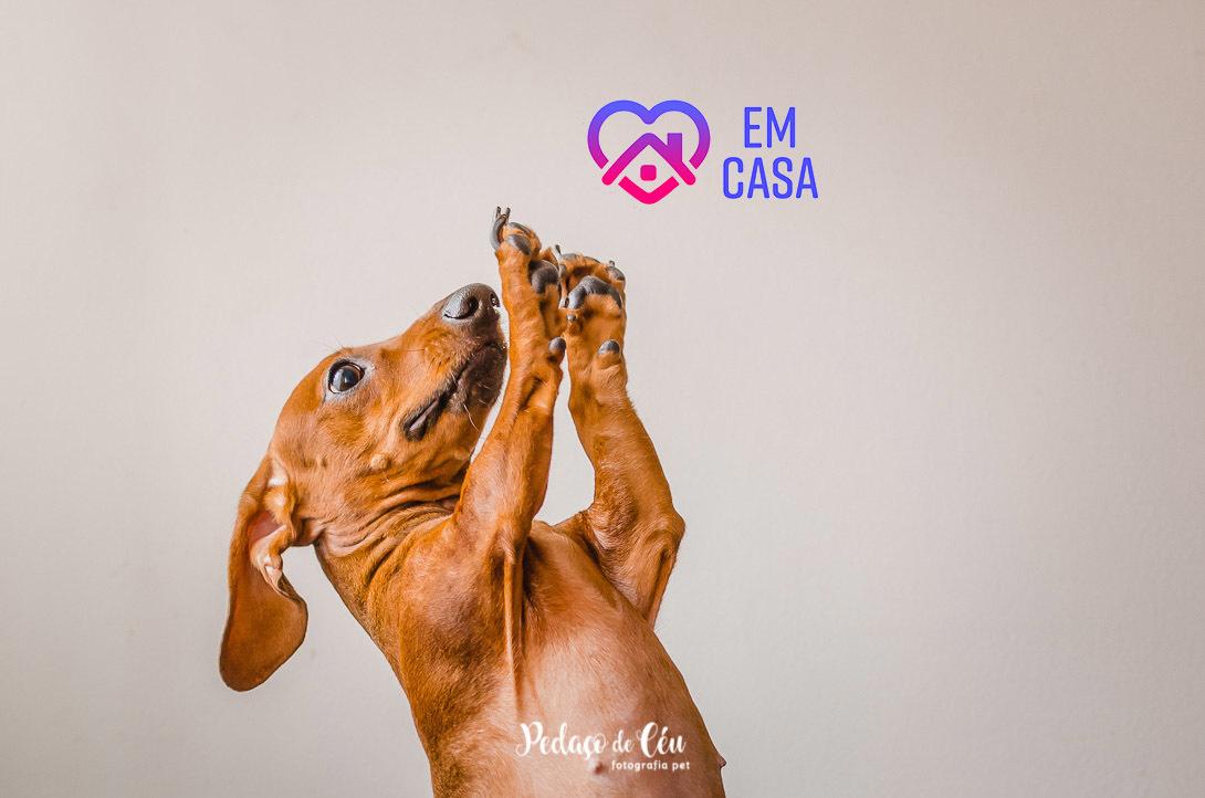 Imagem capa - O que fazer durante a quarentena com seu pet?  por Daiane Oliveira