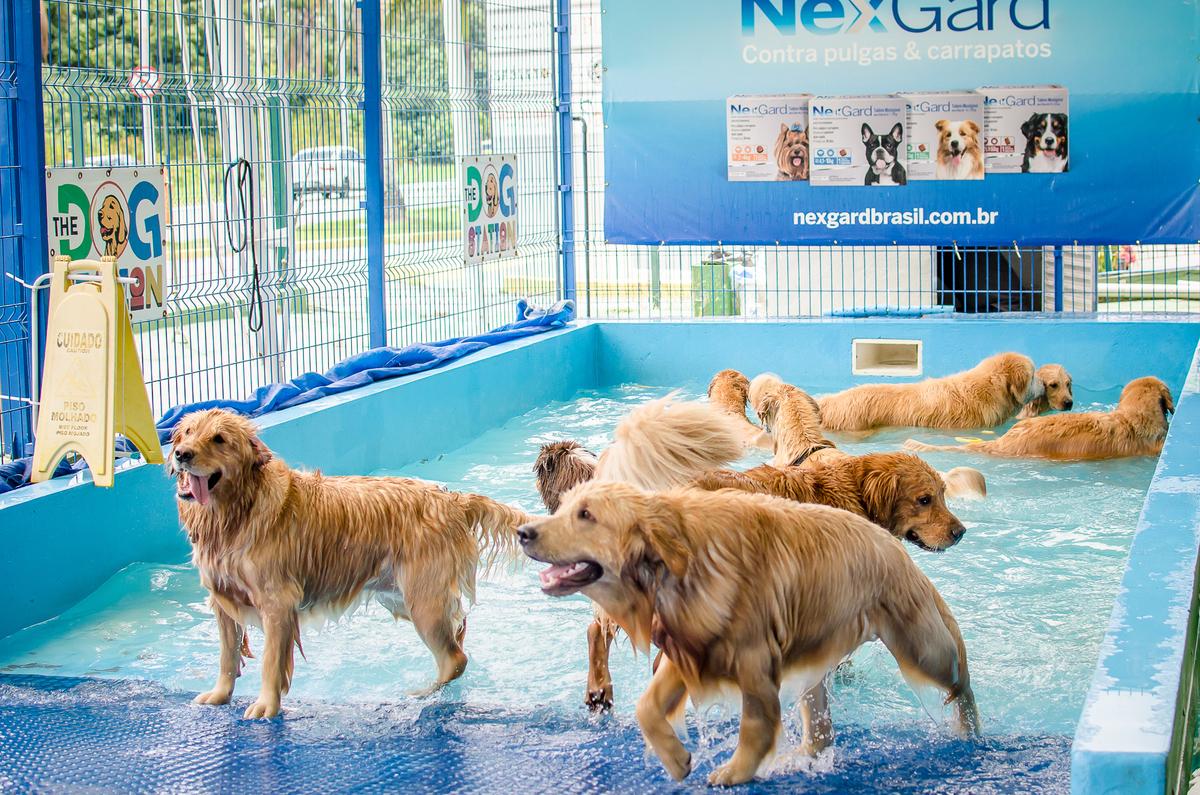 Imagem capa - Encontro de Goldens Dez/2019 - The Dog Station Park por Daiane Oliveira